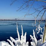 View of Toronto skyline with frozen tree in foreground