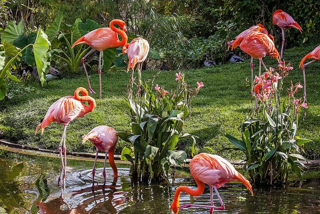 Toronto Zoo - Flamingos