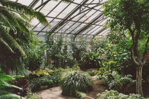 Interior of the Allan Gardens conservatory greenhouse.